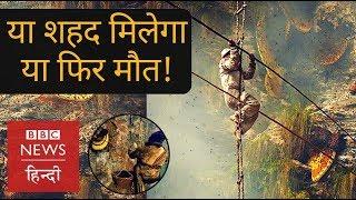 Honey Hunters of Nepal (BBC Hindi)