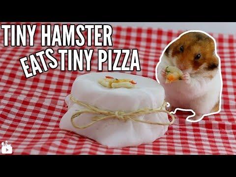 TINY HAMSTER EATS TINY PIZZA