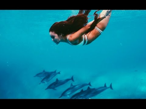 Swimming with Dolphins in Hawaii | viv vlogs #5