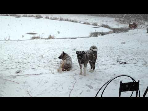 20121229-Snow