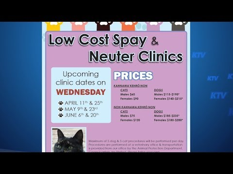 Low Cost Spring Spay & Neuter Clinics