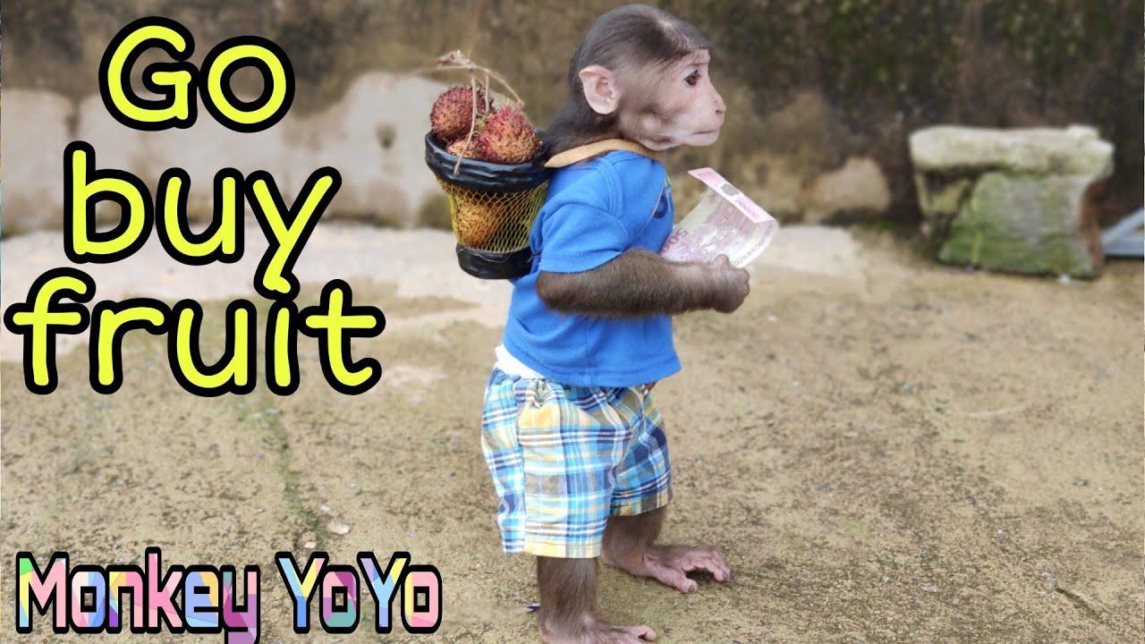 YoYo JR goes to buy fruit