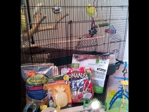Getting a Parakeet / Budgie?  Here's What You'll Need!