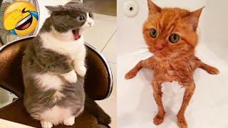 Cute Cats And Dogs That Will Make You Laugh 🥰 - Funny Animals Compilation #4 😂