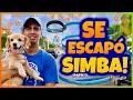 Daniel El Travieso - Mi Perro Se Escapó! (Parte 1)
