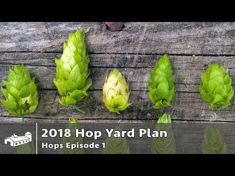 2018 Hop Yard Production For Craft Brewery