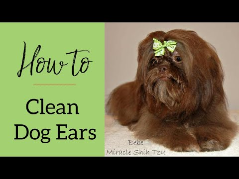 Step by Step Ear Cleaning Video | Small Dog Place