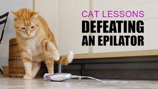 Cat Defeating an Epilator