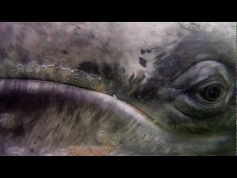 Save The Whales - Eye of the Whale