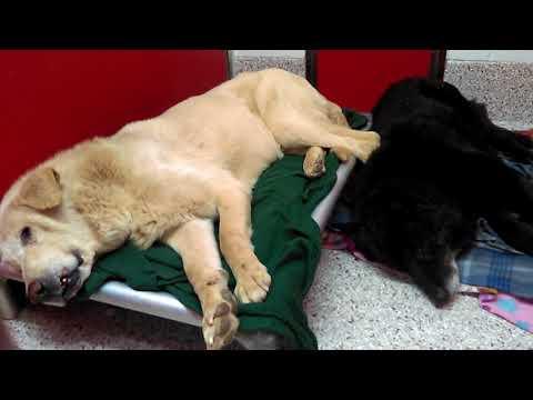 12 Pima Animal Care Center Adoptable Doggies on 1-8-18