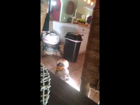 Dog gets in a fight with trash can