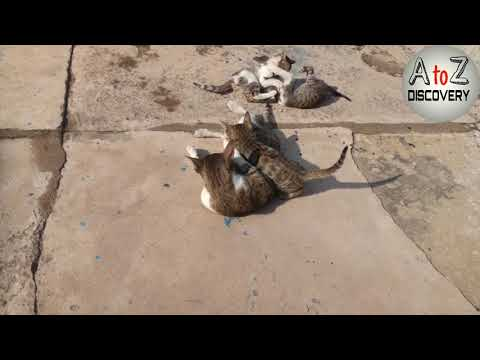 Cute Cats Having Fun In Winter Sunshine | Cat & Kitten Playing Together | Cat Family