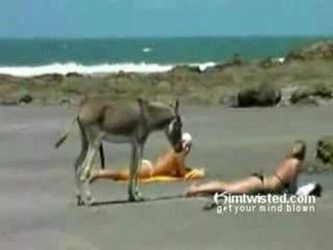 Xxx Mp4 Funny Horny Donkey Have An Erection On The Beach 3gp Sex