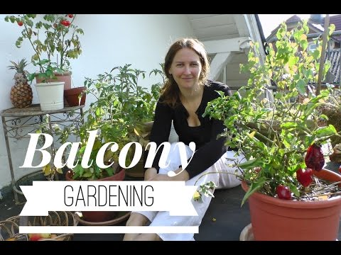 Balcony Gardening: How to keep the pots from drying out on How to Grow a Garden with Scarlett