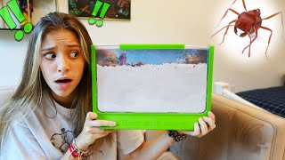 I GOT A REAL LIVE ANT FARM IN THE MAIL!!