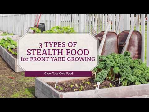 Unusual Edibles: 3 Types of Stealth Food for Front Yard Growing