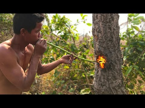 Primitive Culture: Nature Cut Tree Using Fish Oil and Tree Resin