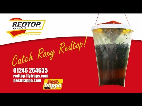 The Redtop Fly Trap - Catch Roxy Redtop Around Your Farm