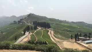 Ilam Nepal || Trip to Ilam