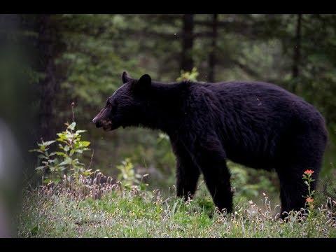 Big Furry Neighbours - Pushing North 105