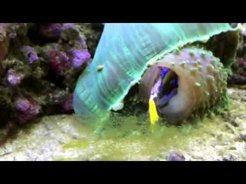 WARNING SAD CONTENT: Crazy Giant mushroom coral eats Nemo and Dory.