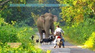 Behavior & chasing Of Elephant (part-1).