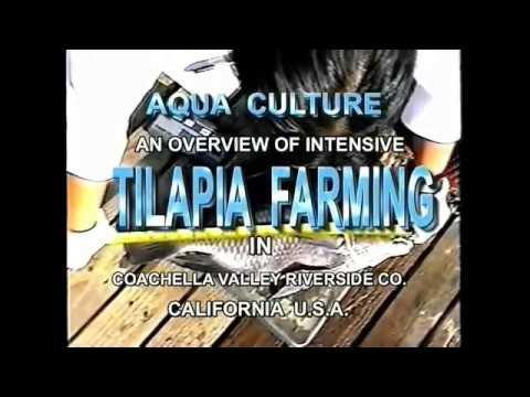 INTENSIVE TILAPIA FARMING