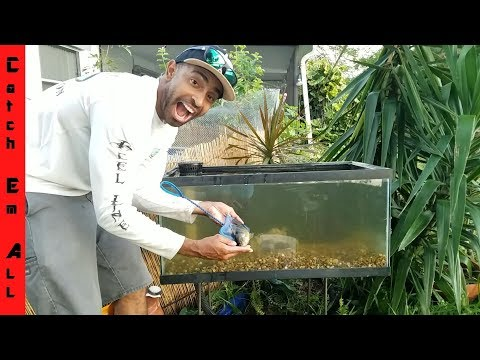 Build Outdoor Fish Tank DIY Aquarium