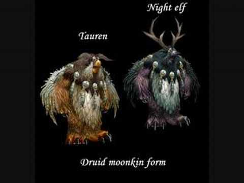 world of warcraft-all the druid forms