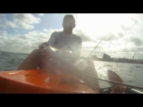 How to catch grunter in the bay