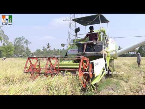 Paddy Rice Cutter | Paddy Cutting Machine | Paddy Rice Cutter Machine