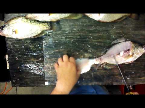 Cleaning Fish