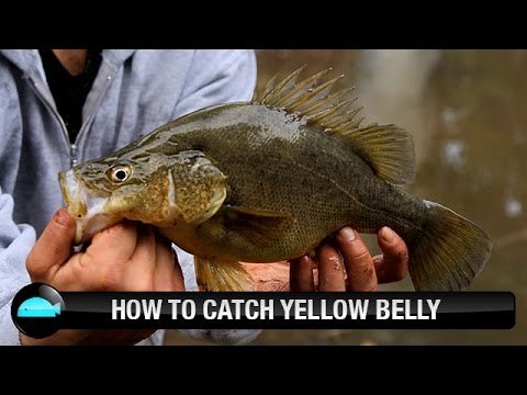 How To Catch Yellow Belly Using Lures | We Flick Fishing Videos