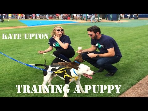 Dog Training Revolution-How To Train A Dog Aggression Towards Strangers