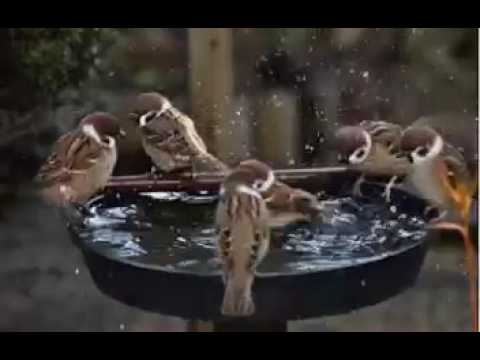 Help birds  by giving them water to survive in summer