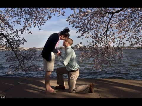 Cherry Blossoms and Young Love in Tokyo Japan (Japanese Girl & American Boy DATING long time ago)
