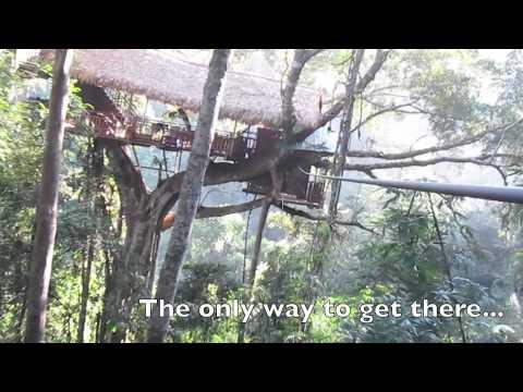 The Original Gibbon Experience