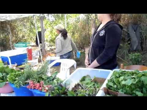 Organic Market San Jose del Cabo