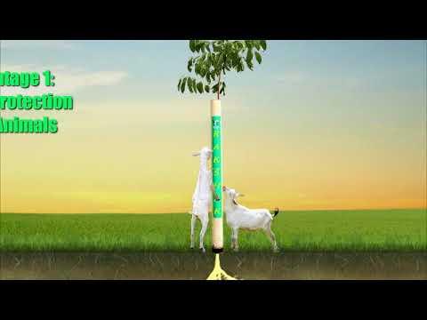 Rakshak self watering tree guard by Rainbow Greeners (India )