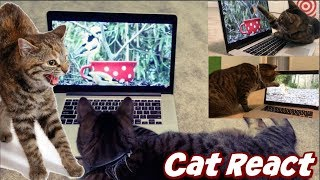 CAT REACT TO VIRAL VIDEOS ON YOUTUBE