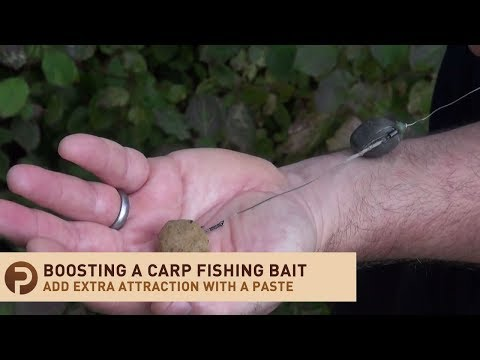 Boosting A Hook Bait For Carp Fishing With A Paste