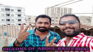 Pigeons of Abdul Basit bhai.(Kabootero