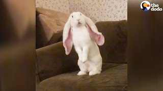 Big-Eared Bunny Flips Out | The Dodo