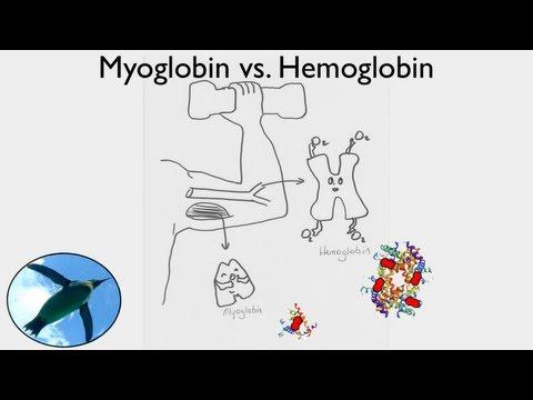 Getting Oxygen:  Myoglobin vs. Hemoglobin