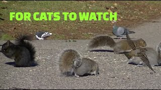 Movie For Cats To Watch - Cats Love This Video !