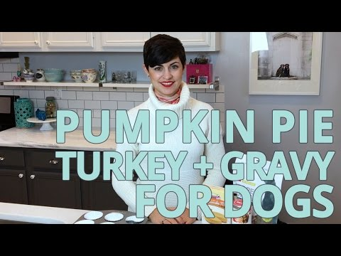 Pumpkin Pie and Thanksgiving Recipes for Your Dog
