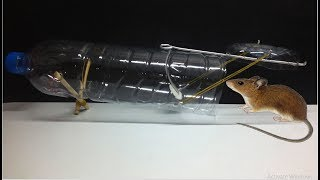 best homemade mouse trap ever easy mouse trap using plastic bottle