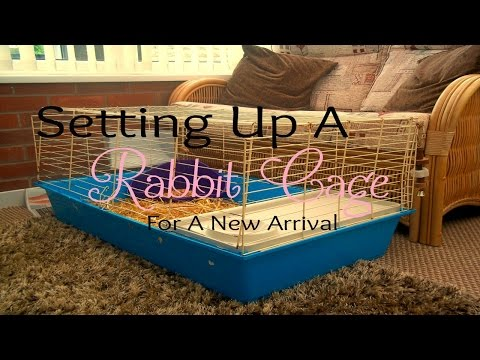 Setting Up A Rabbit Cage For A New Arrival | RosieBunneh
