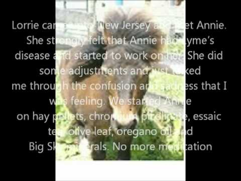 Lymes disease equine results /
