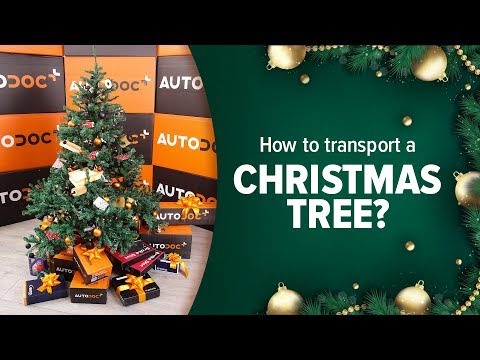 How to transport a Christmas tree? 🎄
